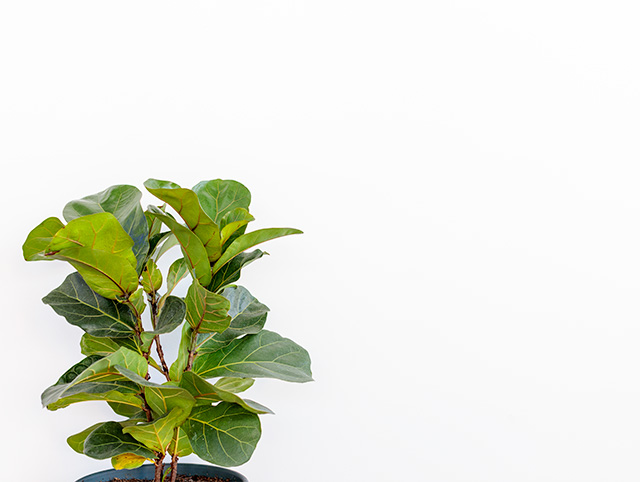 Photo of a green plant for the purpose of blog post
